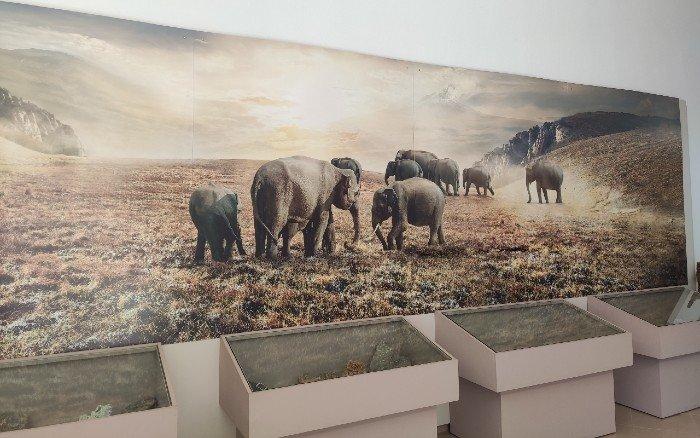 Museum of Dwarf Elephants Tilos