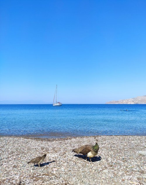 Plaka beach Tilos island Greece