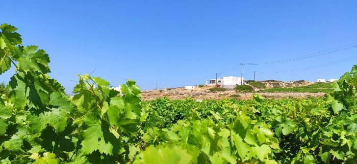 Moraitis winery best things to do